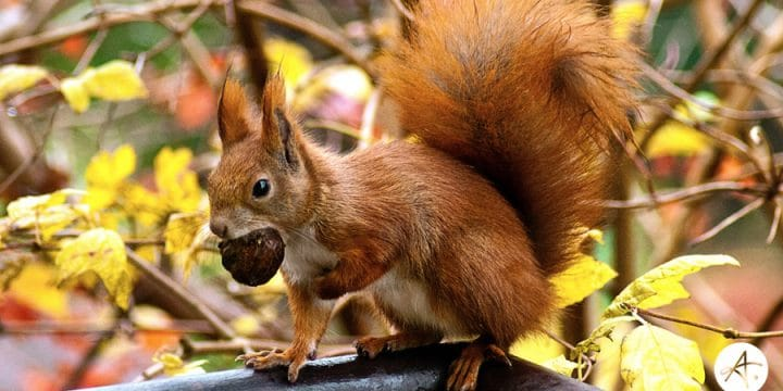 Making Hay & Stashing Acorns: How growing businesses can maximize a good economy, but prepare for inevitable recession